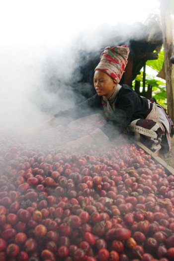 Сезон кардамона в горном районе Нам Канг - ảnh 3