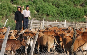Политика, направленная на ликвидацию голода и бедности  в уезде Мыонгне - ảnh 2