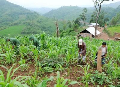 Политика, направленная на ликвидацию голода и бедности  в уезде Мыонгне - ảnh 1
