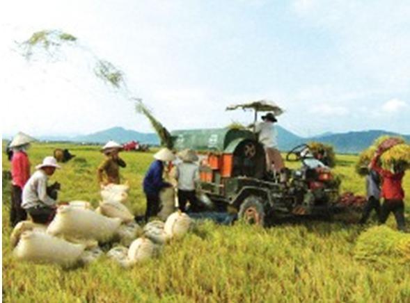Повышение качества сельскохозяйственной продукции Вьетнама - ảnh 1