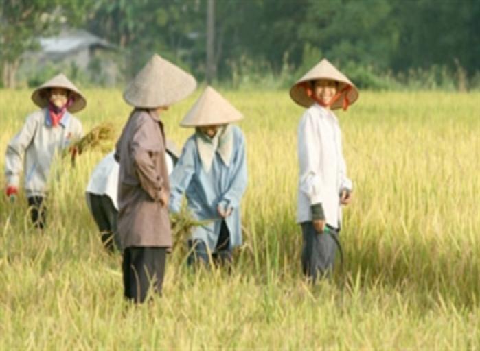 Упехи, достигнутые в 2011 году Вьетнамом в ликвидации голода и снижении бедности - ảnh 1
