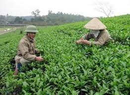 На ВЭФ в Давосе высокая оценка дана развитию сельского хозяйства Вьетнама - ảnh 1