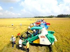 В провинции Анзанг успешно осуществлена планировка больших полей - ảnh 1