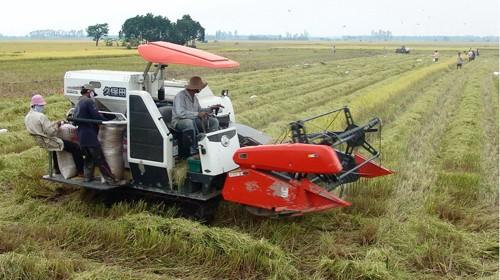 В провинции Анзанг успешно осуществлена планировка больших полей - ảnh 2