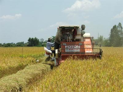 В провинции Анзанг успешно осуществлена планировка больших полей - ảnh 3
