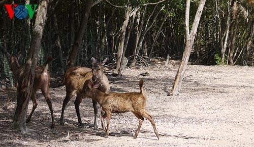 Посещение биосферного заповедника Канзо - ảnh 7