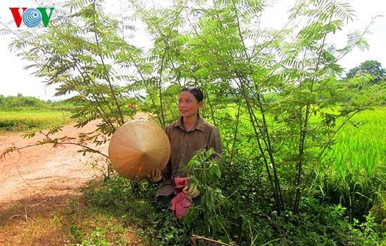 Уборка урожая риса в провинции Нгеан - ảnh 10