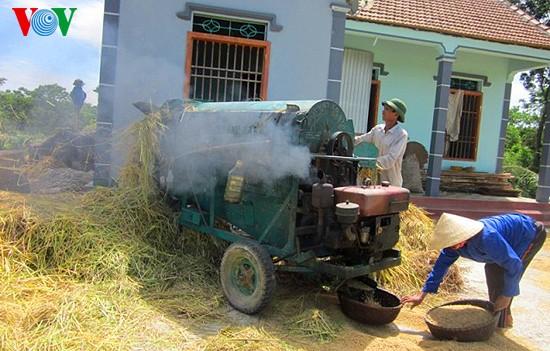 Уборка урожая риса в провинции Нгеан - ảnh 14