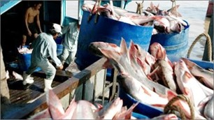 Сенат США решил отменить программу по контролю над производством сома пангасиуса - ảnh 1
