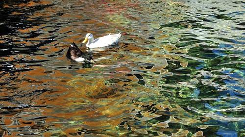 Красота архипелага Спратли в фотографиях - ảnh 10