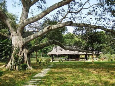 Революционная база Танчао признана Комплексом национальных исторических... - ảnh 1
