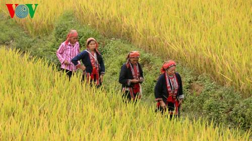 Террасные рисовые поля Хоангшуфи - ảnh 2