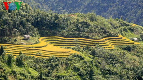 Террасные рисовые поля Хоангшуфи - ảnh 3