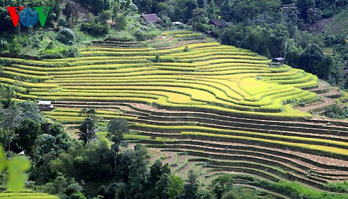 Террасные рисовые поля Хоангшуфи - ảnh 5