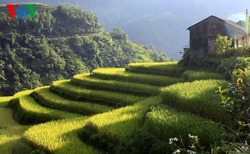 Террасные рисовые поля Хоангшуфи - ảnh 6