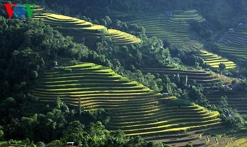 Террасные рисовые поля Хоангшуфи - ảnh 7