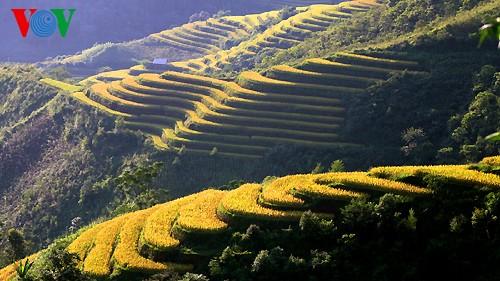 Террасные рисовые поля Хоангшуфи - ảnh 8