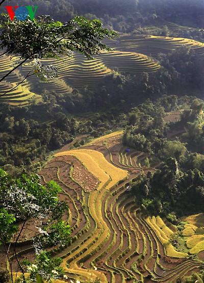 Террасные рисовые поля Хоангшуфи - ảnh 9