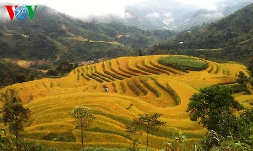 Террасные рисовые поля Хоангшуфи - ảnh 10