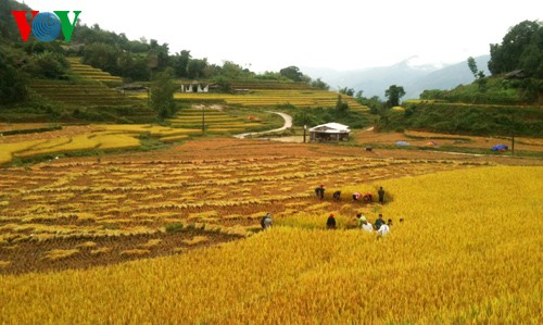 Террасные рисовые поля Хоангшуфи - ảnh 11