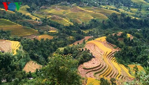 Террасные рисовые поля Хоангшуфи - ảnh 12