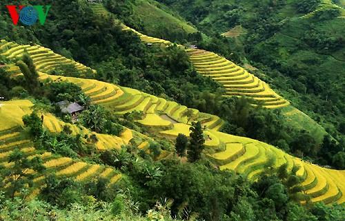 Террасные рисовые поля Хоангшуфи - ảnh 13