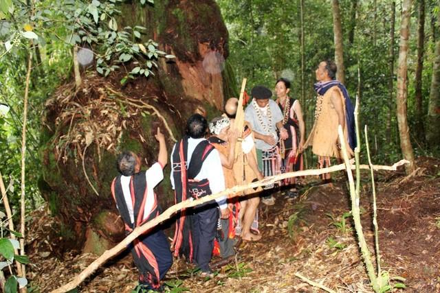 Người Cơ Tu tạ ơn rừng - ảnh 3