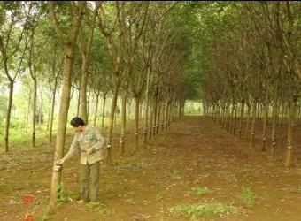 Huyện Nam Đông, tỉnh Thừa Thiên Huế chung tay xây dựng nông thôn mới - ảnh 1