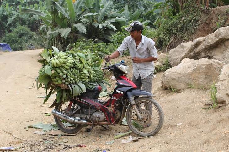 Nông dân vùng biên Huổi Luông, Lai Châu thoát nghèo nhờ trồng chuối - ảnh 2