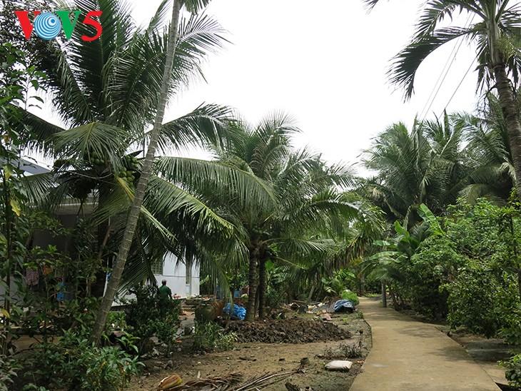 Cây dừa ở miệt vườn Bến Tre - ảnh 2