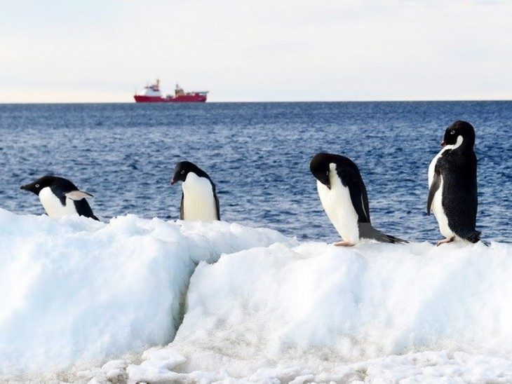 World effort to protect penguins in Antarctica - ảnh 1