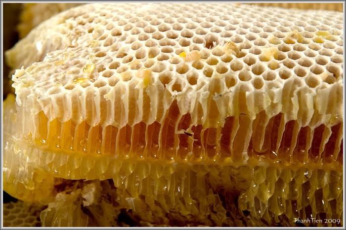 养蜂致富和适应气候变化 - ảnh 1