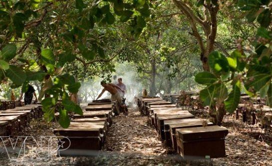 养蜂致富和适应气候变化 - ảnh 2