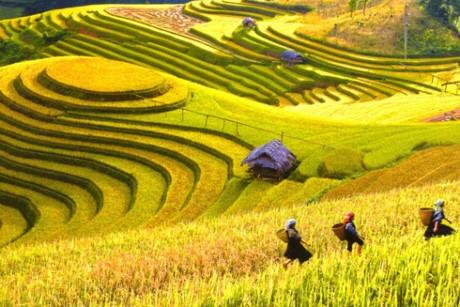 德国电视一台的探索越南节目拍摄进入尾声 - ảnh 1