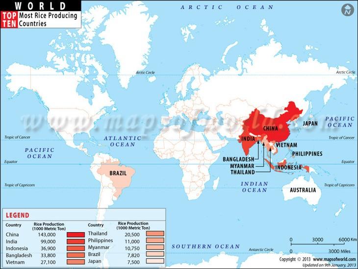 อินเดียเป็นประเทศผู้ส่งออกข้าวรายใหญ่ที่สุดของโลก - ảnh 1