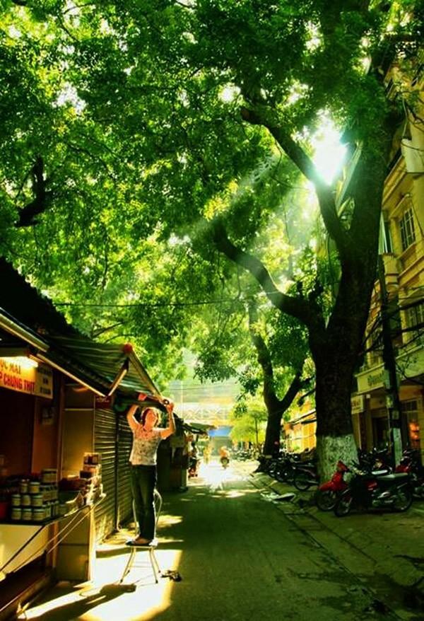 Hanoi en los últimos días del otoño  - ảnh 1
