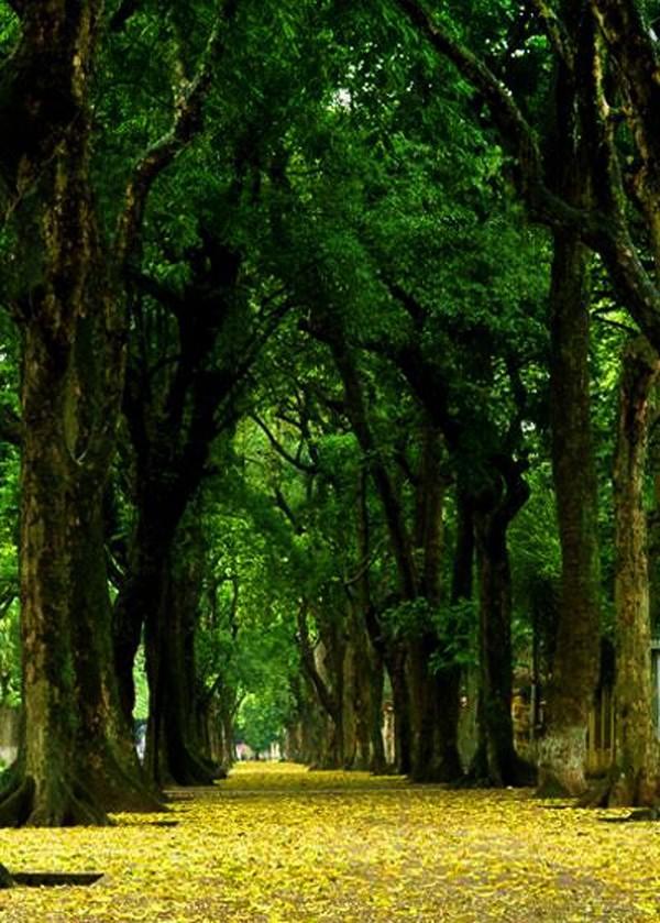Hanoi en los últimos días del otoño  - ảnh 15