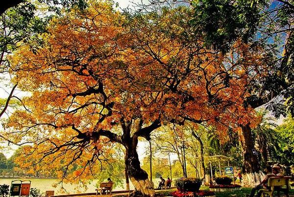 Hanoi en los últimos días del otoño  - ảnh 16