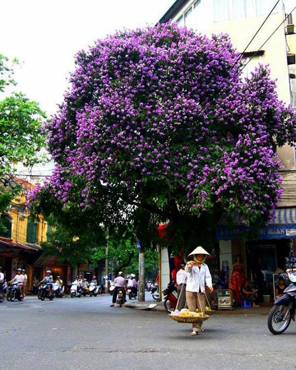 Hanoi en los últimos días del otoño  - ảnh 4
