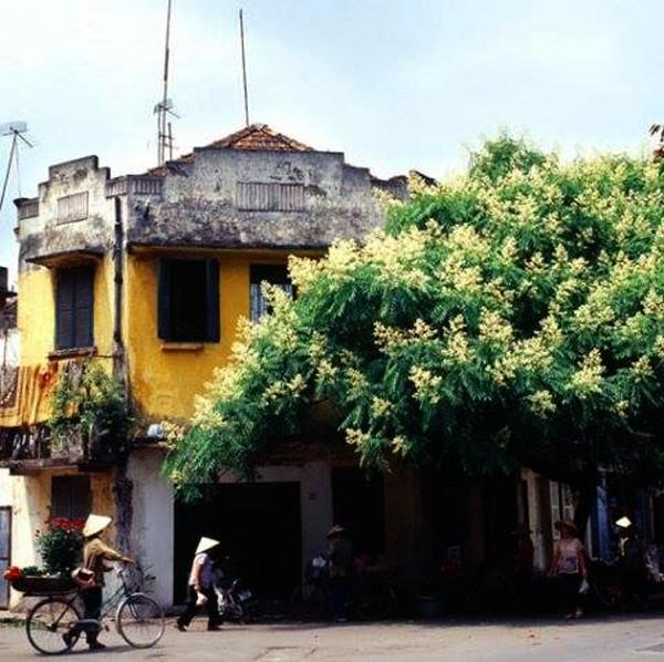 Hanoi en los últimos días del otoño  - ảnh 6