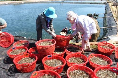 Exportaciones de artículos acuáticos salvan economía vietnamita - ảnh 1