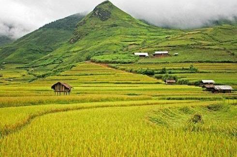 Ejemplos en construcción de grandes arrozales en provincia montañosa de Yen Bai - ảnh 1
