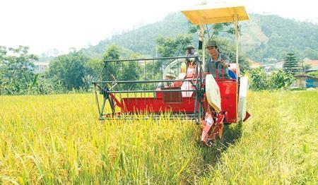 Ejemplos en construcción de grandes arrozales en provincia montañosa de Yen Bai - ảnh 2