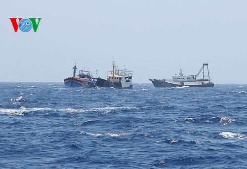 Pescadores vietnamitas mantienen trabajo con valentía en aguas violadas por China - ảnh 14