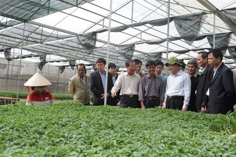 Don Duong, un área especializada de verduras  - ảnh 1