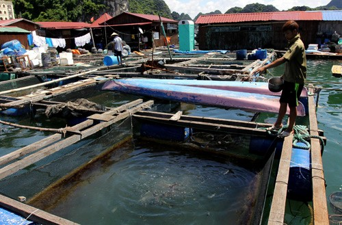 Vietnam prevé en 7 mil millones de dólares la exportación de productos acuáticos - ảnh 1