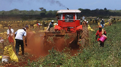 Vietnam y Cuba fortalecen cooperación económica y comercial - ảnh 1