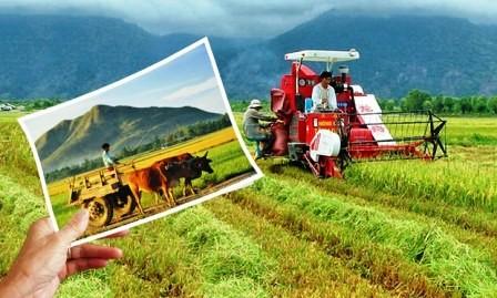 Fortalecen inversiones de empresas en el sector agrícola - ảnh 1