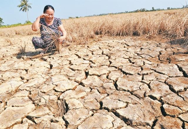 En el Delta del Mekong se esfuerzan por ahorrar agua - ảnh 1