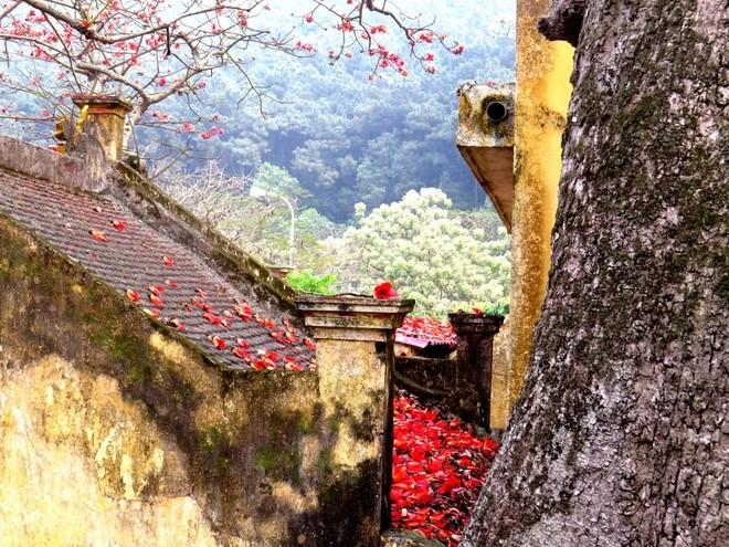 Algodonero rojo, princesa de las flores de ciudad portuaria de Hai Phong - ảnh 6